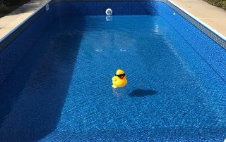Inground Pool with Duck